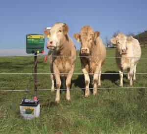 Recinto elettrico per mucche al pascolo
